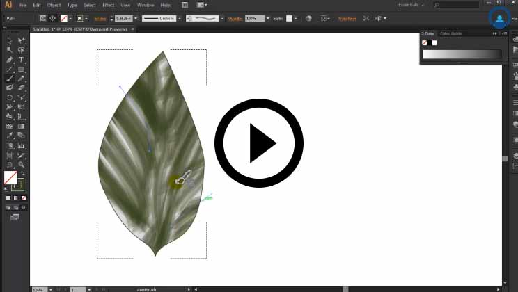 Adobe Illustrator Tutorials Training