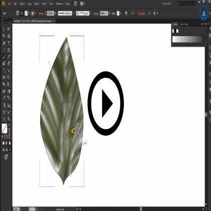 Adobe Illustrator Tutorials Training